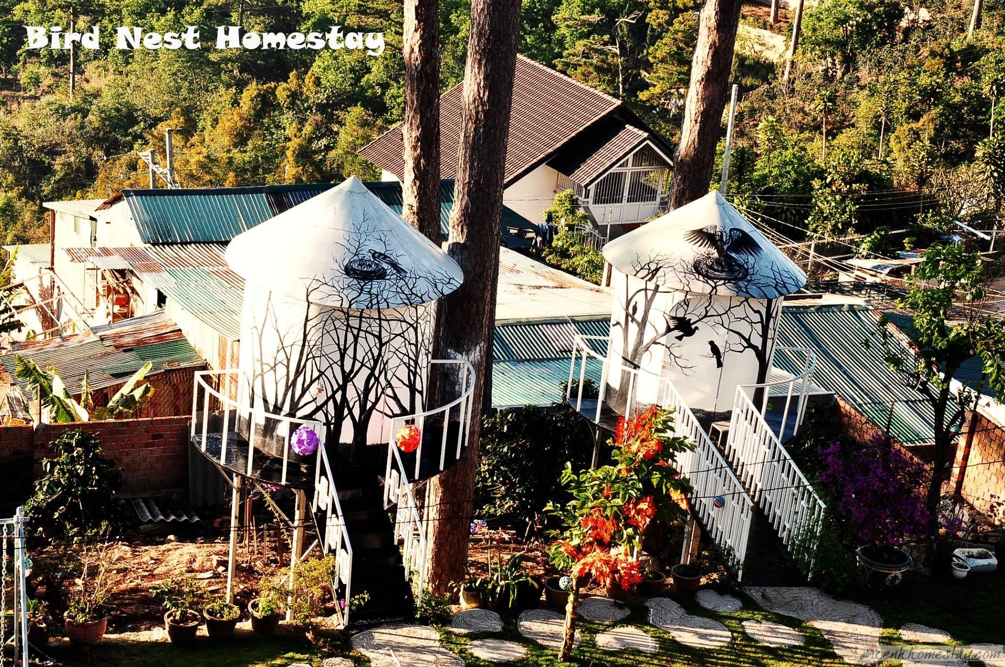 Tổ Chim Homestay: Review trải nghiệm ngủ lơ lửng trên cây ở Đà Lạt