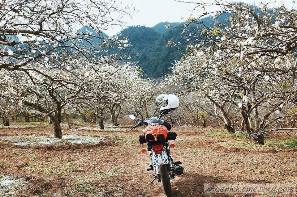 Top địa điểm cho thuê xe máy ở Mộc Châu giá rẻ 100k/ngày không thể bỏ qua