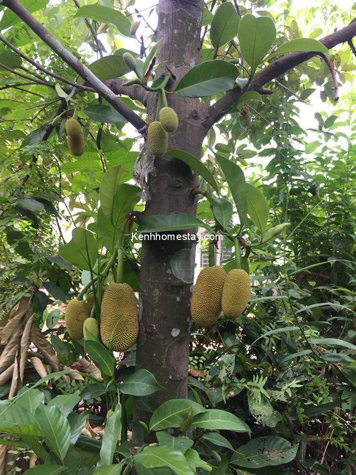 Top 10 vườn trái cây miền Tây - miền Nam nổi tiếng bao ngon từ 10k