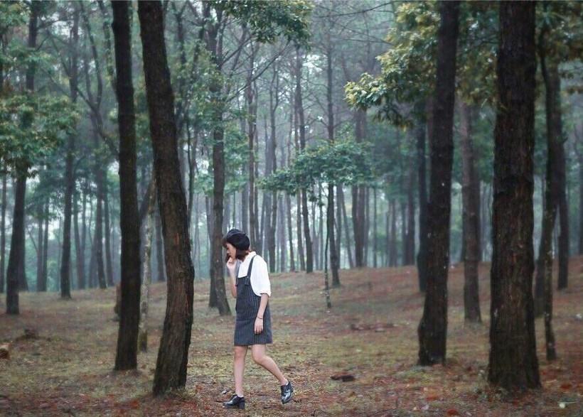 Top 7 rừng thông đẹp, lên hình siêu ảo diệu đáng sống ảo Việt Nam
