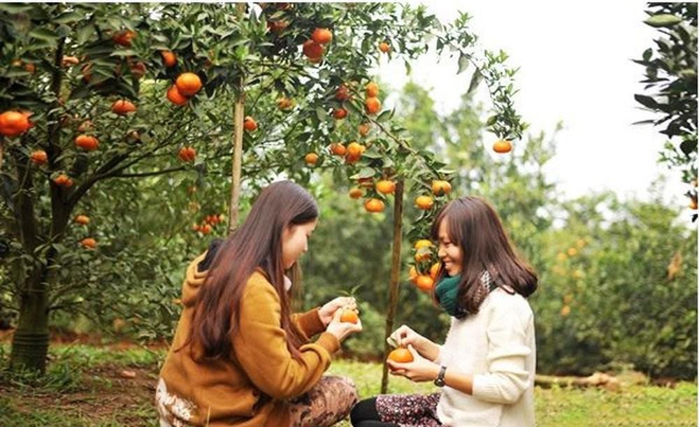 Top 10 Vườn trái cây Bến Tre nổi tiếng ăn ngon tham quan MIỄN PHÍ