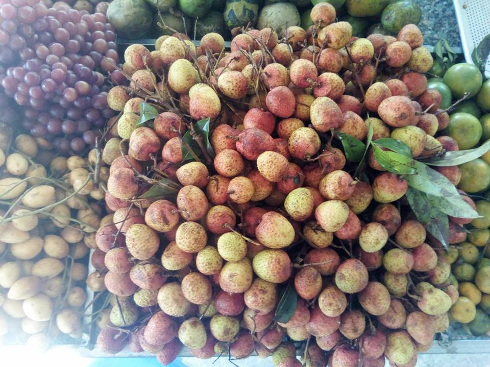 Top 10 vườn trái cây Bến Tre nổi tiếng tham quan MIỄN PHÍ