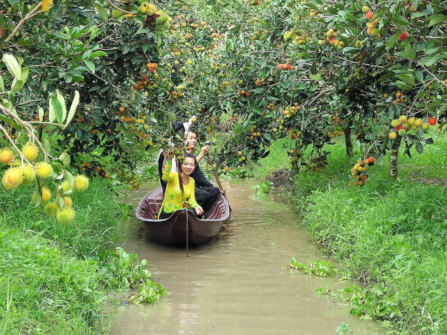 Top 10 Vườn trái cây Cần Thơ nổi tiếng ăn ngon tham quan MIỄN PHÍ nên ghé