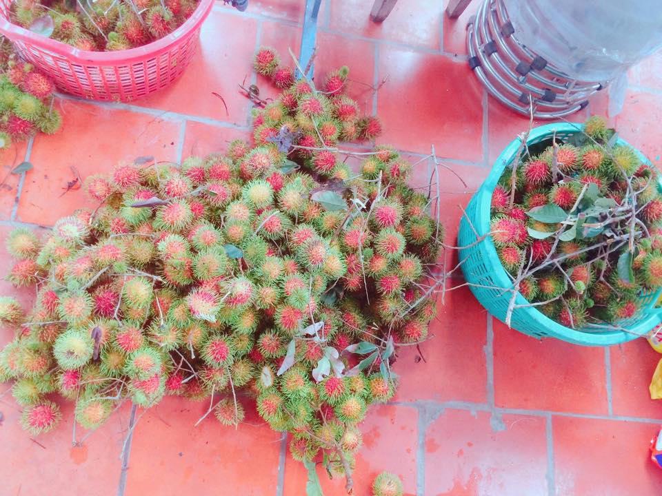 Top 10 vườn trái cây Củ Chi – Trung An đáng để tham quan hái trái