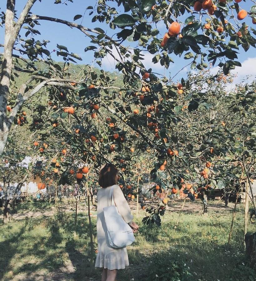 Top 07 vườn hồng Đà Lạt: review địa chỉ, kinh nghiệm tham quan A-Z