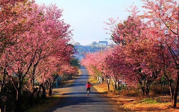 Tháng 1 nên du lịch ở đâu? Phượt 20 địa điểm đẹp trong tháng 1 đáng đi