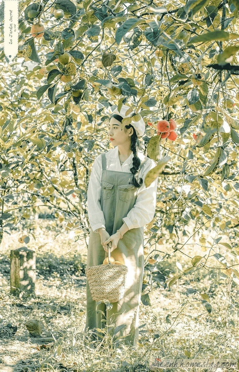 """Ghé thăm vườn hồng – điểm check in đẹp """"rụng tim"""" ở Đà Lạt"""