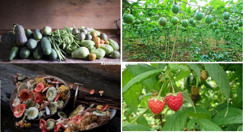 Andante Farm & Lodge – Homestay lọt thỏm giữa rừng thông bình yên Đà Lạt