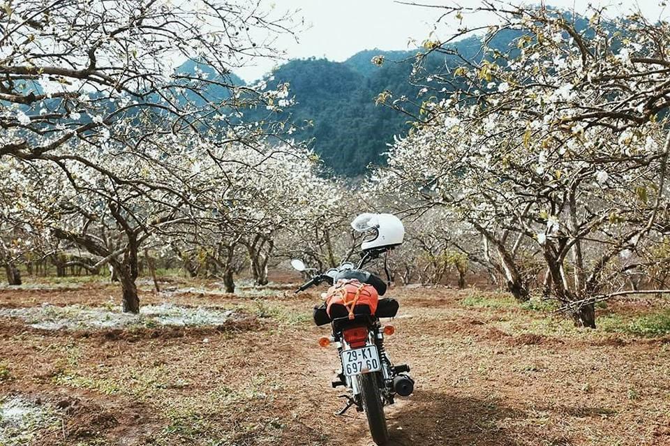 V House Homestay Mộc Châu lọt thỏm giữ thung lũng rừng mơ thơ mộng