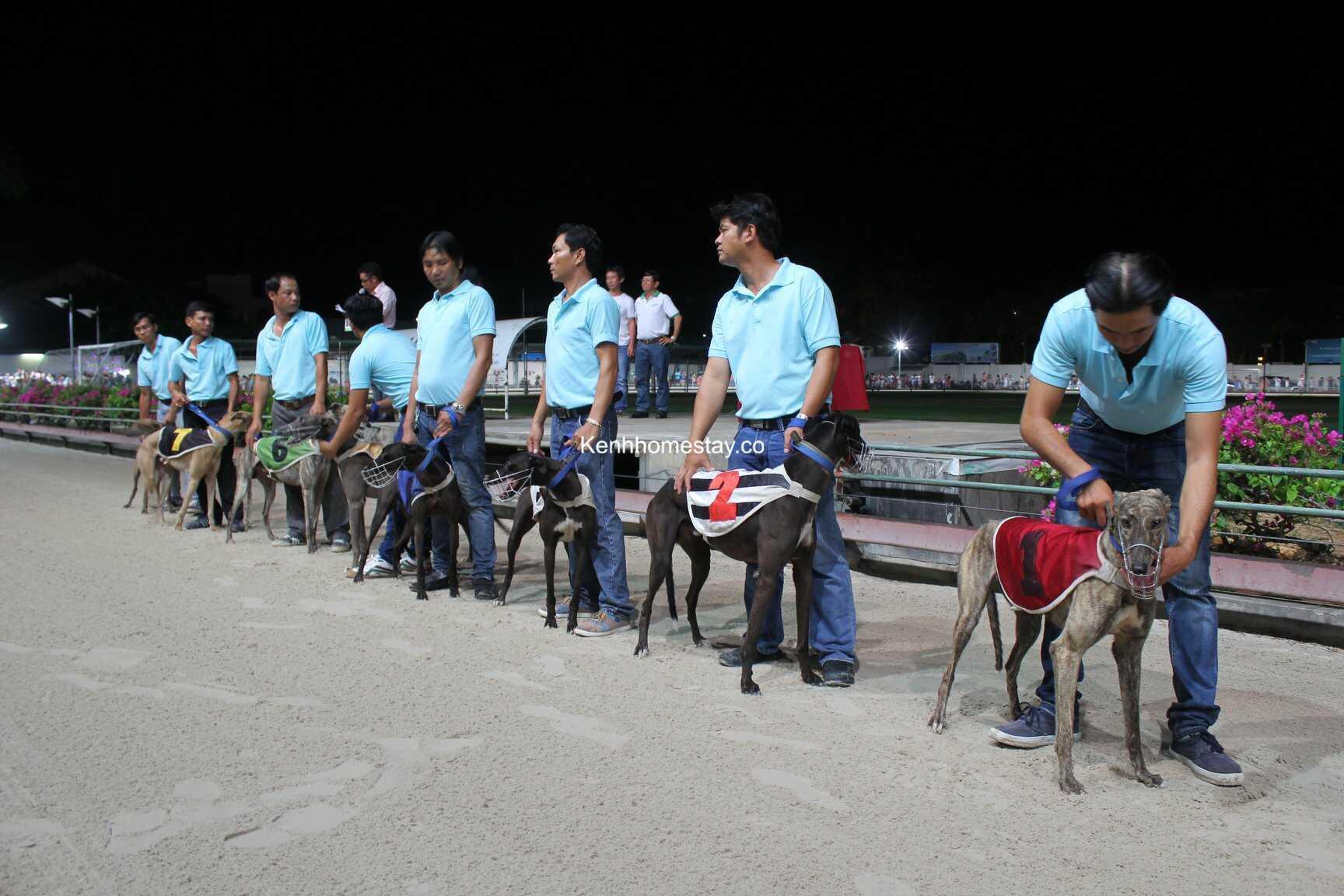 Đua chó Vũng Tàu: Ở đâu, lịch đua, giá vé và kinh nghiệm tham quan
