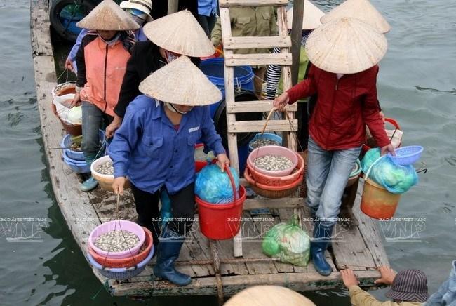 Top 10 Chợ Vựa hải sản Quảng Ninh tươi sống giá rẻ đáng để mua