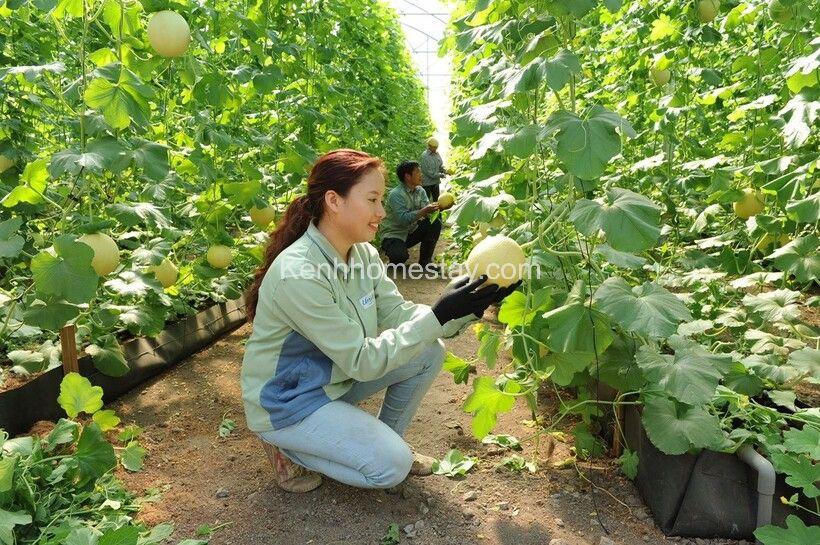 Chiến lược phát triển homestay/farmstay dành cho người mới khởi nghiệp