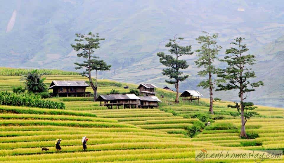 Top 10 Homestay Mù Cang Chải giá rẻ đẹp view ngắm ruộng bậc thang